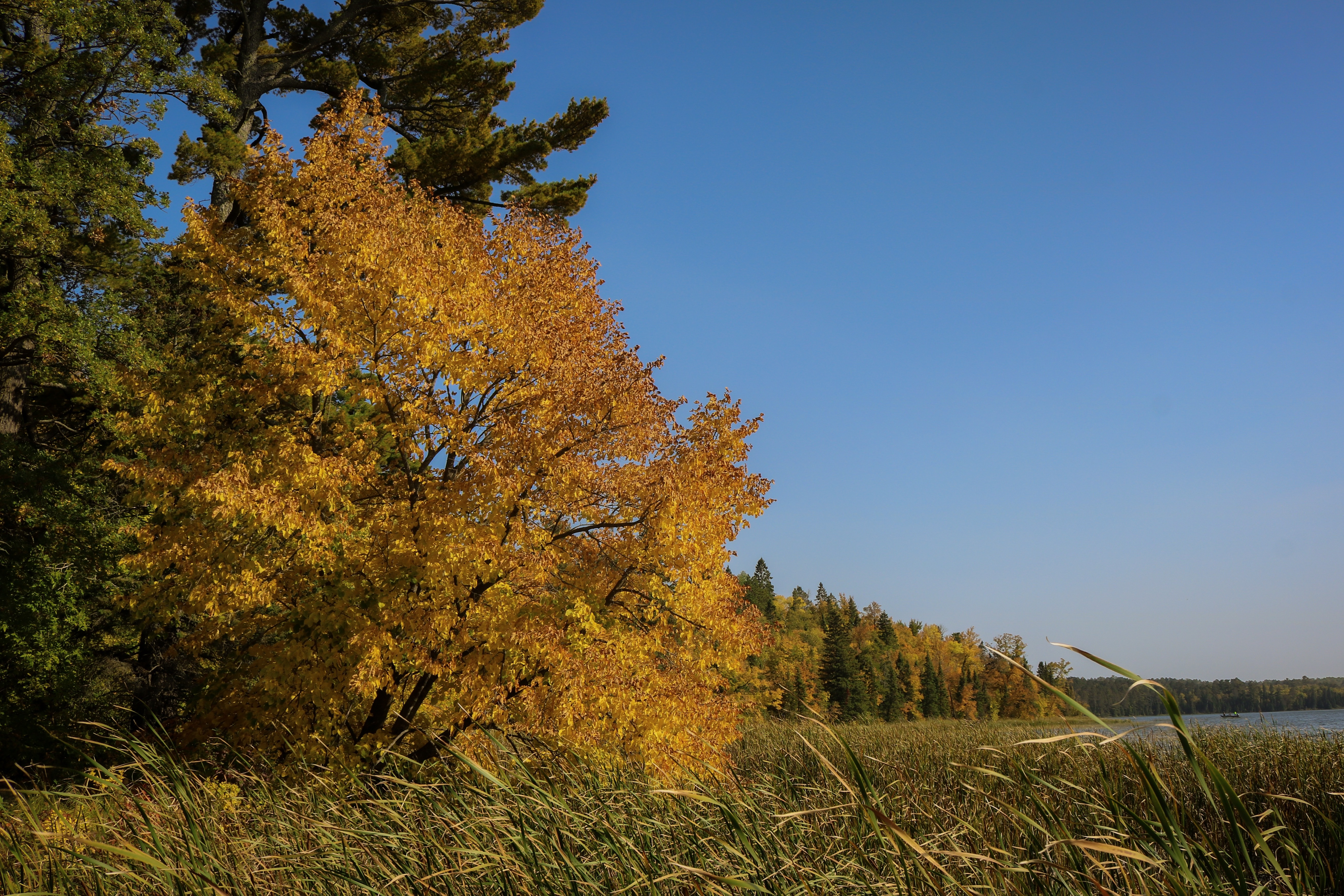 Trees with bright orange and yellow trees line the shore of Elk Lake at Itasca State Park.