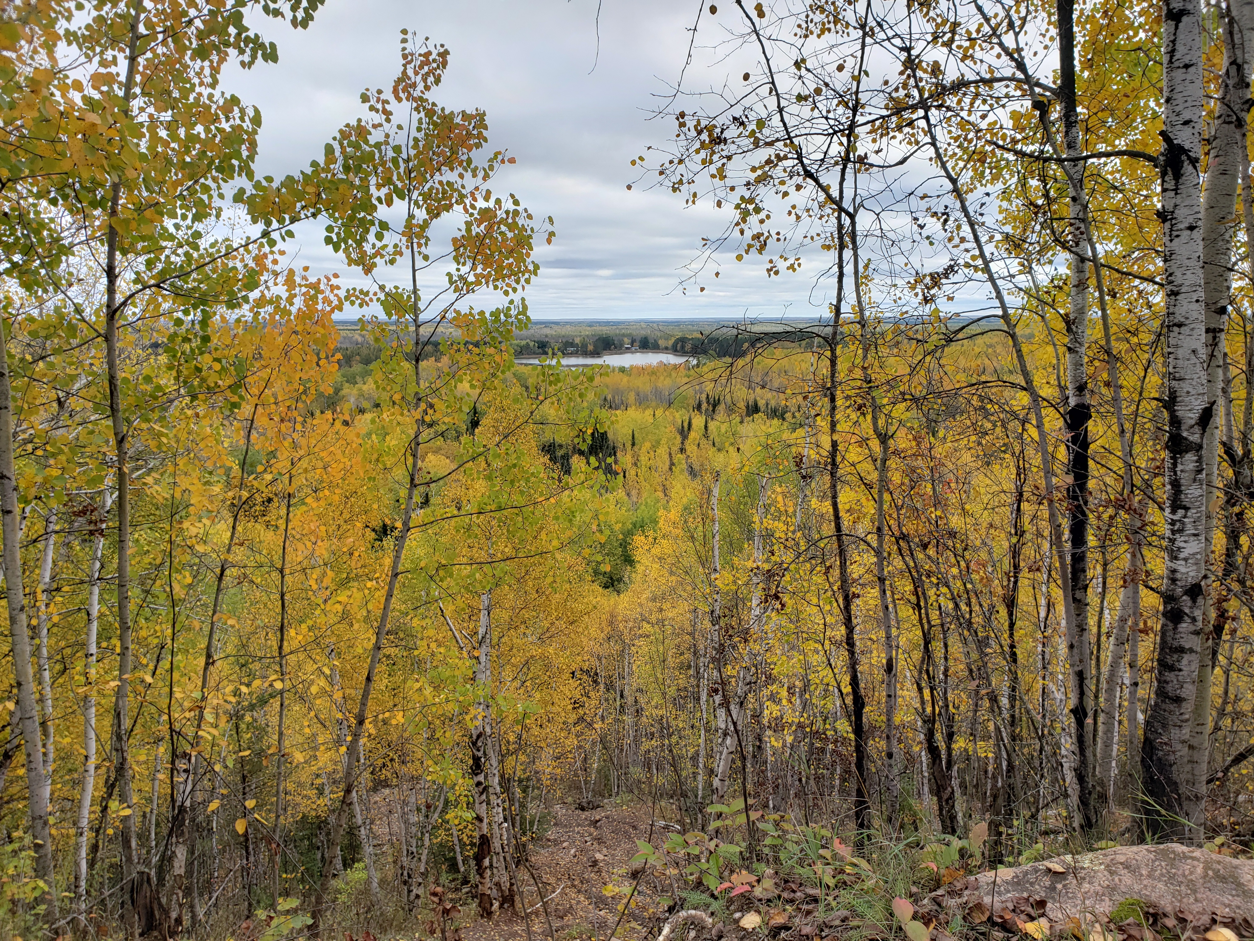 Overlook of trees that go to the horizon. Pine trees dot the yellow fall leaves, a lake can be seen in the distance.