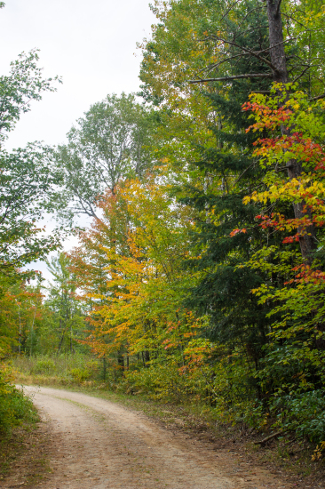 George Washington State Forest - Minnesota DNR