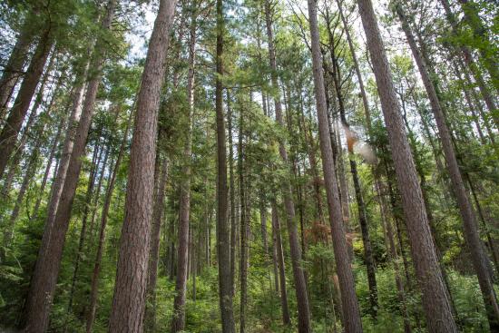 Kabetogama State Forest - Minnesota DNR